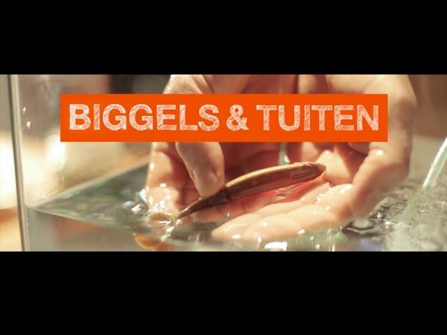 Biggels en Tuiten - vanaf 4 jaar