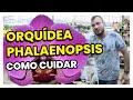 Como cuidar da ORQUÍDEA PHALAENOPSIS | Murilo Soares | SPAGNHOL PLANTAS