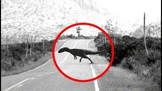 Dinosaurs Caught On Camera + Strange Creatures On Google Maps