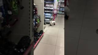 Собака марширует