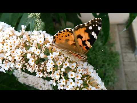 The Butterfly, Bees & Hummingbird Moth