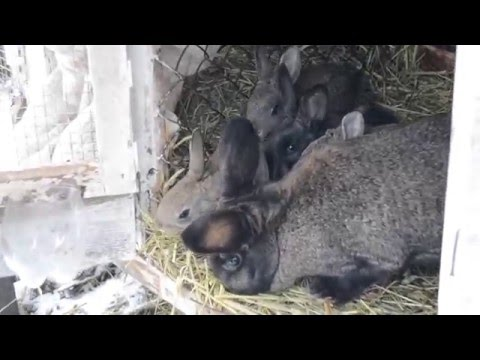 Таблица питания кормящей мамы