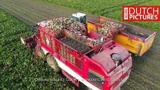 Sugar beet harvest - Suikerbieten rooien - Zuckerrübenernte - Zbiór...