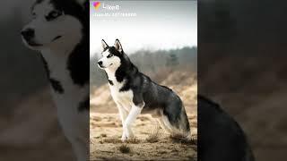 видео с лайка собаки
