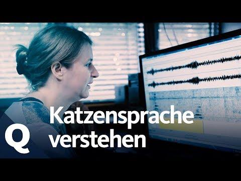 Katzensprache: Diese Frau kann 'ktzisch' bersetzen | Quarks