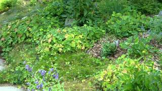 urban farm for sale, auburn maine part 1