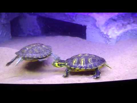 D cor aquarium pour tortues aquatiques turtle tank for Aquarium tortue