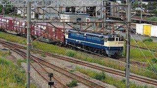 2019/06/14 【隅田川シャトル】 JR貨物 77レ EF65-2091 東京貨物ターミナル | JR Freight: EF65-2091 at Tokyo Kamotsu Terminal