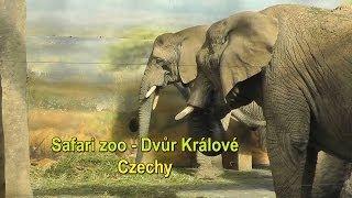 Safari zoo - Dvůr Králové Czechy (HD)