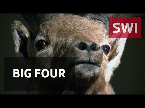 Iconic Swiss animals take centre stage