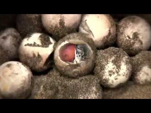 Becoming Myth: Sea Turtles & Asia | David Arthur