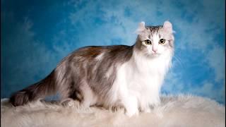 Очень красивые кошки.