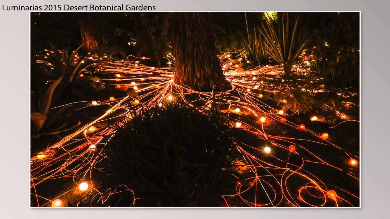 1512-Luminarias-Desert Botanical Gardens - YouTube