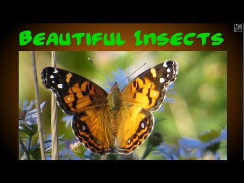 Beautiful Insects 3D HD slideshow