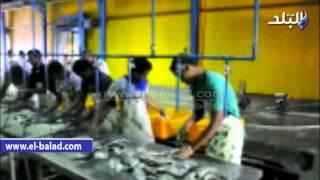 بالفيديو والصور ..'مصر-أسوان' تمول مركز البحوث لتنمية الثروة السمكية ببحيرة ناصر