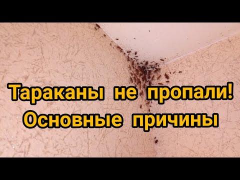 Вопрос: Как не подпустить тараканов к своей постели?