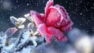 Ninge cu dragoste