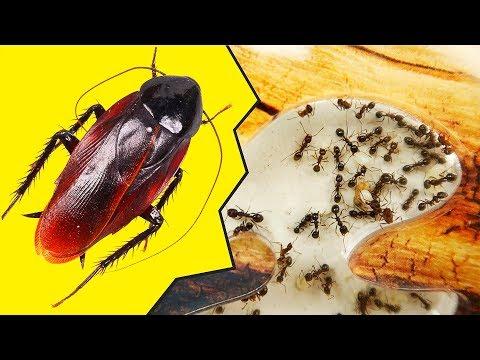 Муравьи и Туркменские Тараканы. Паук и муравьи запрещенное видео!