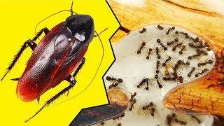 Муравьи и Туркменские Тараканы. Паук и муравьи - запрещенное видео!