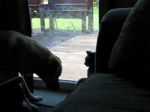 Cat Shows Dog Who Is Boss!