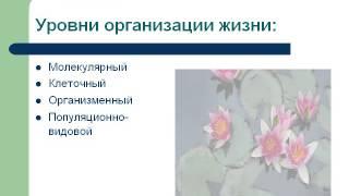Презентация Общая биология