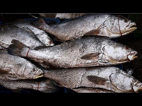 Sea Fish in Bangladesh [ 1080p]