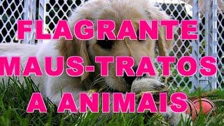 Flagrante de maus-tratos a animais