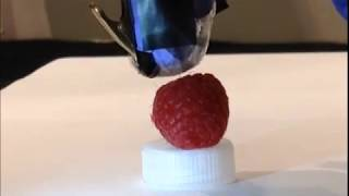 Robot gently touches a raspberry
