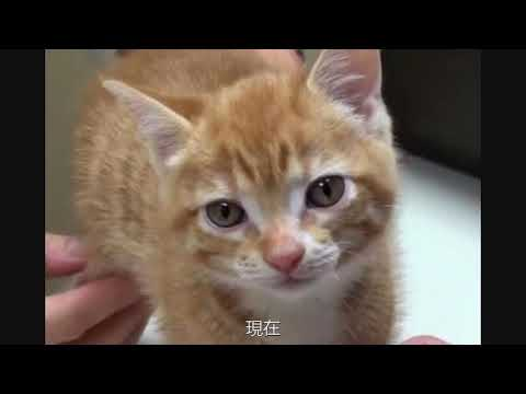 可憐又無助!8個月中國小橘貓被誤關集裝箱漂洋過海…