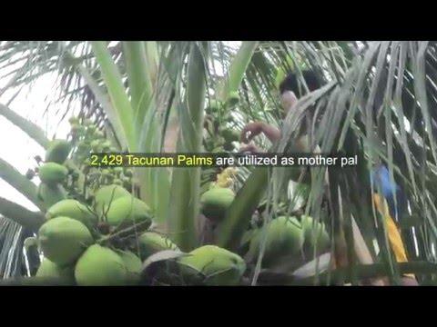 PHILIPPINE COCONUT AUTHORITY REGION VII - ACCOMPLISHMENT CY 2015
