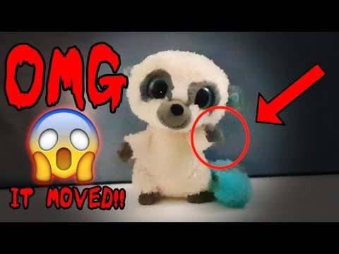 Haunted Beanie Boo Toy CAUGHT MOVING ON CAMERA 6c14fff3477e