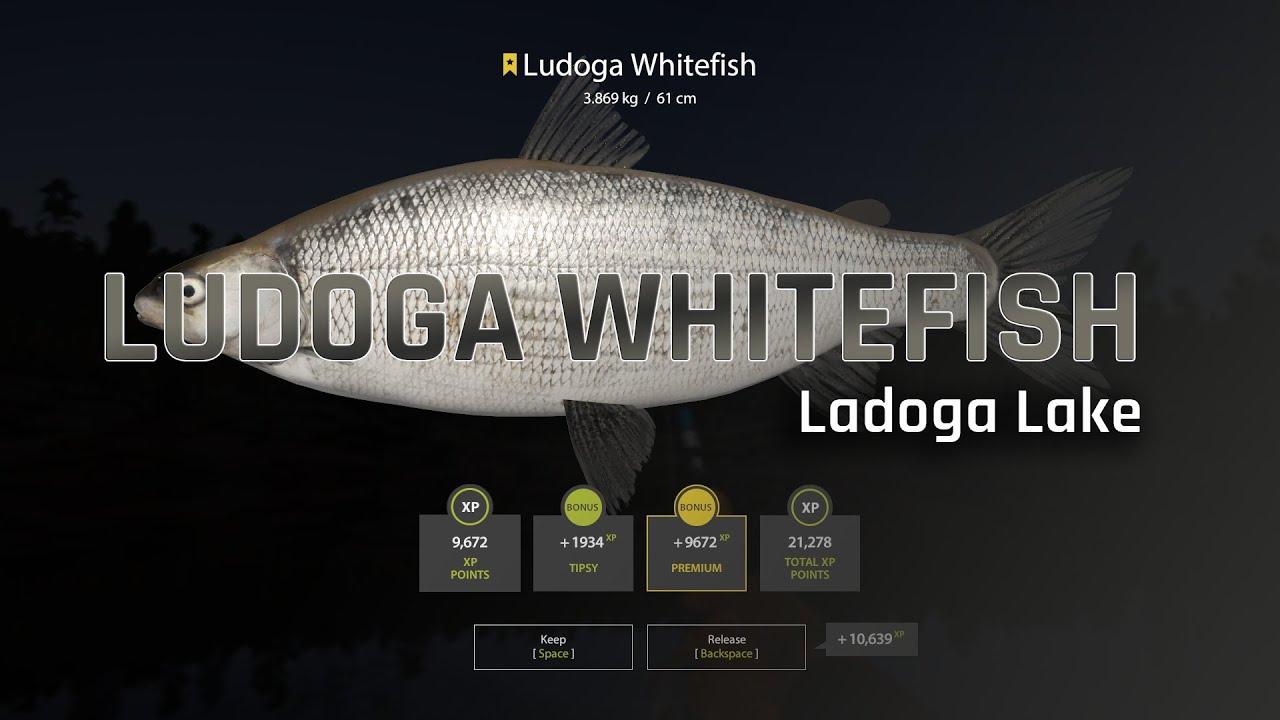 Russian Fishing 4 - RF4 | Ladoga Whitefish | Ladoga Lake ...