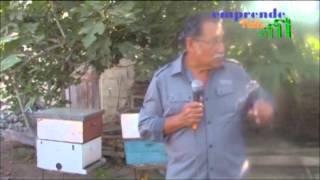 Emprende Valle: Apicultor en Santa Clara, programa Nº6, bloque 4