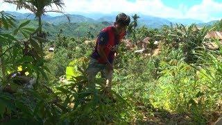Các mô hình giảm nghèo ở miền núi Quảng Ngãi chưa phát huy hiệu quả