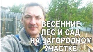 видео Лес и Сад. Новости