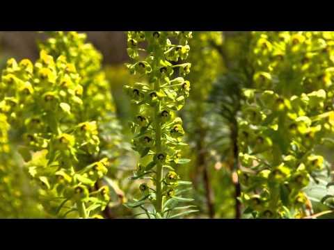 Garden Visit  Saville Gardens, Egham, Surrey FINAL