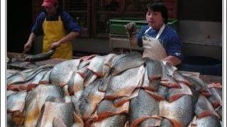 チリ産の鮭を地元の人が食べない理由が衝撃的すぎる thumbnail