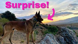 あっま~い!!休暇から戻った飼い主が、犬にこんなどっきりをしかけてみたところ、犬大興奮!