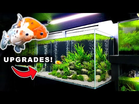 💚 GOLDFISH AQUARIUM UPGRADE! 🅑🅤🅑🅑🅛🅔🅢 & 🅖🅡🅐🅥🅔🅛