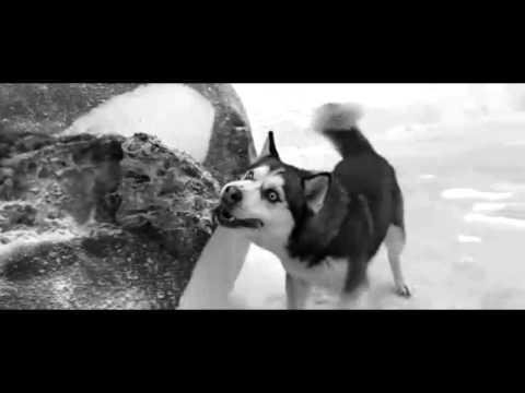 Dj mirou Sad days Antartica, prisonniers du froid HD poster