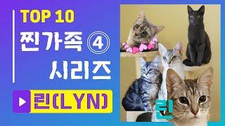 [세로]고양이 찐가족 시리즈④ 생후 6주 고양이가  2살된 고양이들 엄마가 되다