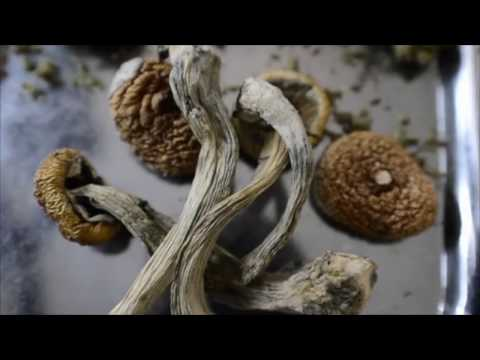 Two Blunts & A Mushroom