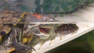 6) Аквариум-террариум для черепах своими руками. Охота