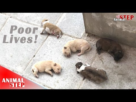 Stray Dog Family Nobody Wanted to Help Get Second Chance at Life