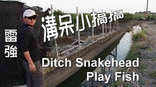 Play Fish 12c, Ditch Snakehead Fishing 溝呆小搞搞