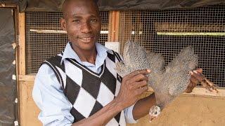 Le Ghana mise sur l'élevage de pintades