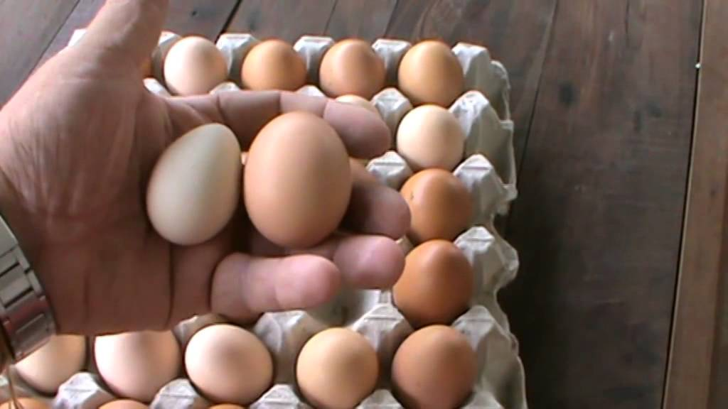 Guinea Egg Comparsion With A Chicken Egg Youtube