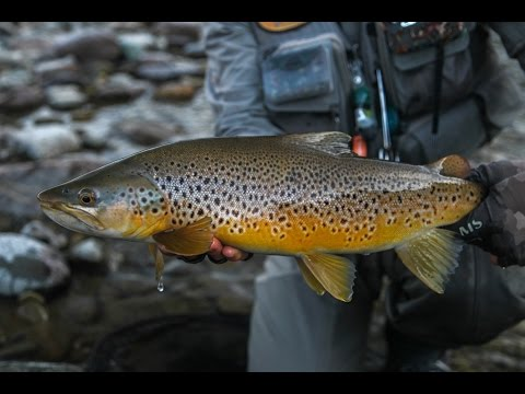 Fly fishing NZ - Late Season 'Southern Sojourn'.