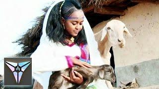 Rahel Okbagaber - Begiey (Official Video) | New Eritrean Music 2016