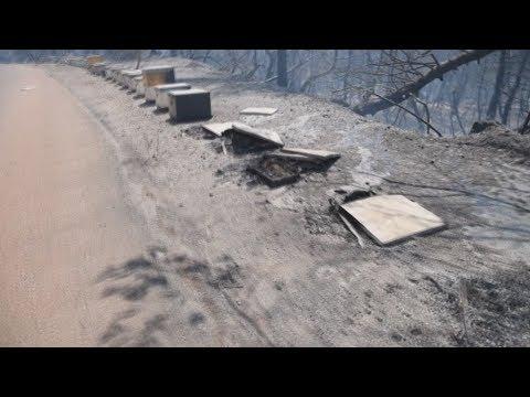 Σε ύφεση η πυρκαγιά στο Κοντοδεσπότι Ευβοίας